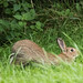 Rabbit Yoga - Woods Mill (70)