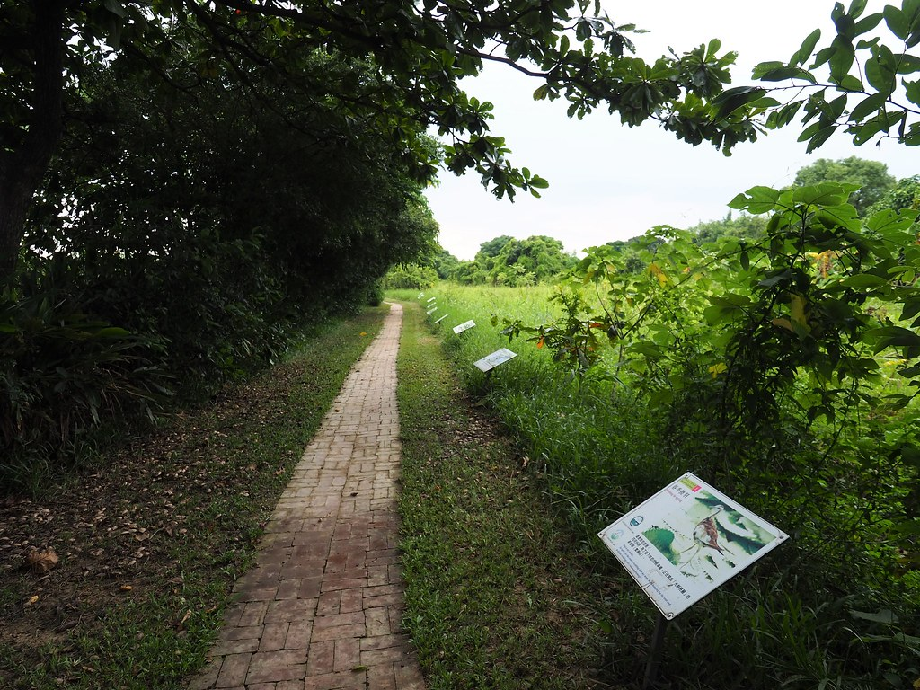 官田菱角 (20)