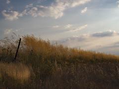 fotos en el campo