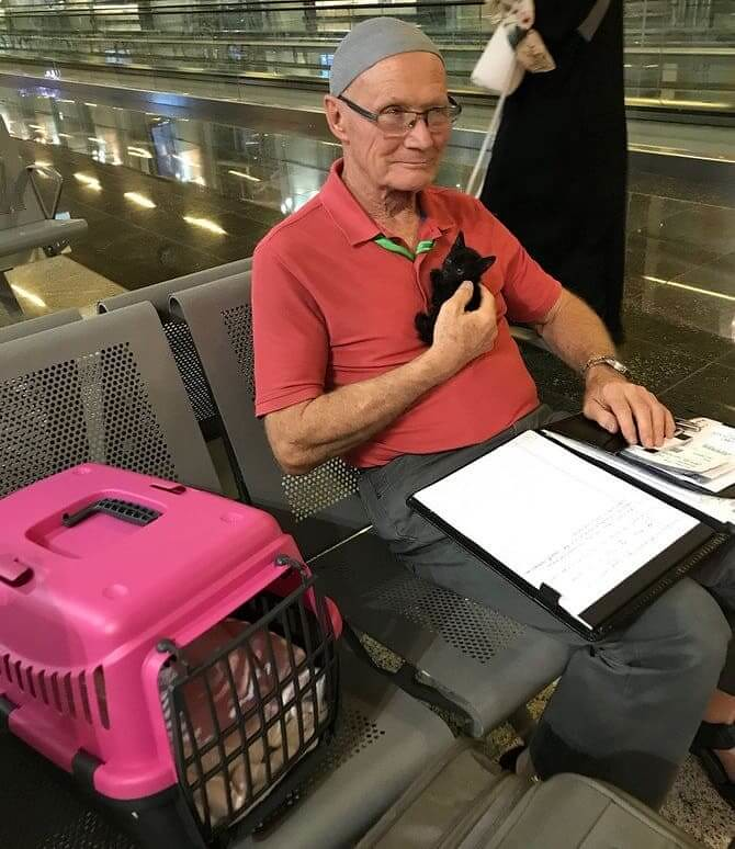4650 The story of Immigration of a stray cat from Madina to Canada 02