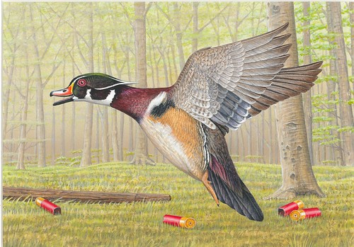 2018 Federal Duck Stamp Contest Entry 023