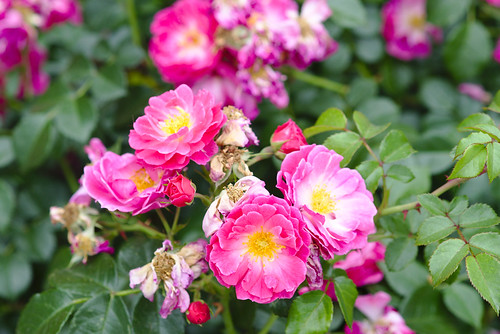 In bloom, Brooklyn Bridge Park