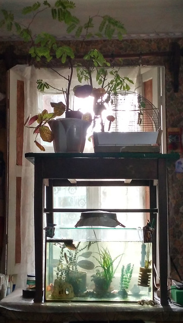 Аквариум и цветы