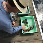 Samples of marine species from the Rapid Assessment Survey 2018 at Rowes Wharf