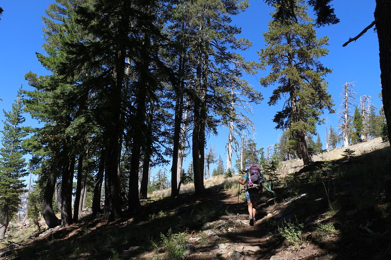 The trees begin to thin as we climb higher on the Tahoe-Yosemite Trail west of Phipps Peak