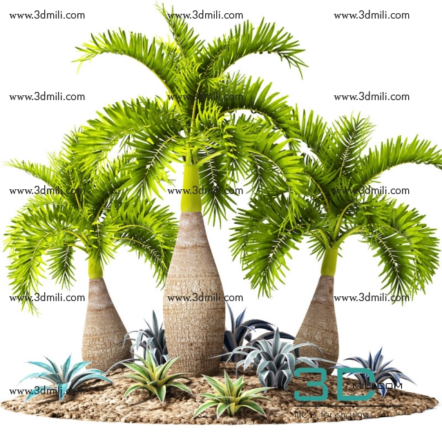 423  Palm collection 3dsmax File Free Download - 3D Mili