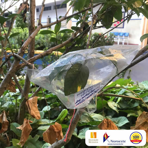 3º ano - Experiência sobre transpiração das plantas