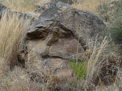 Diaclasas de lajamiento y descamación en bolo granítico - Plasencia (Cáceres, España) - 01
