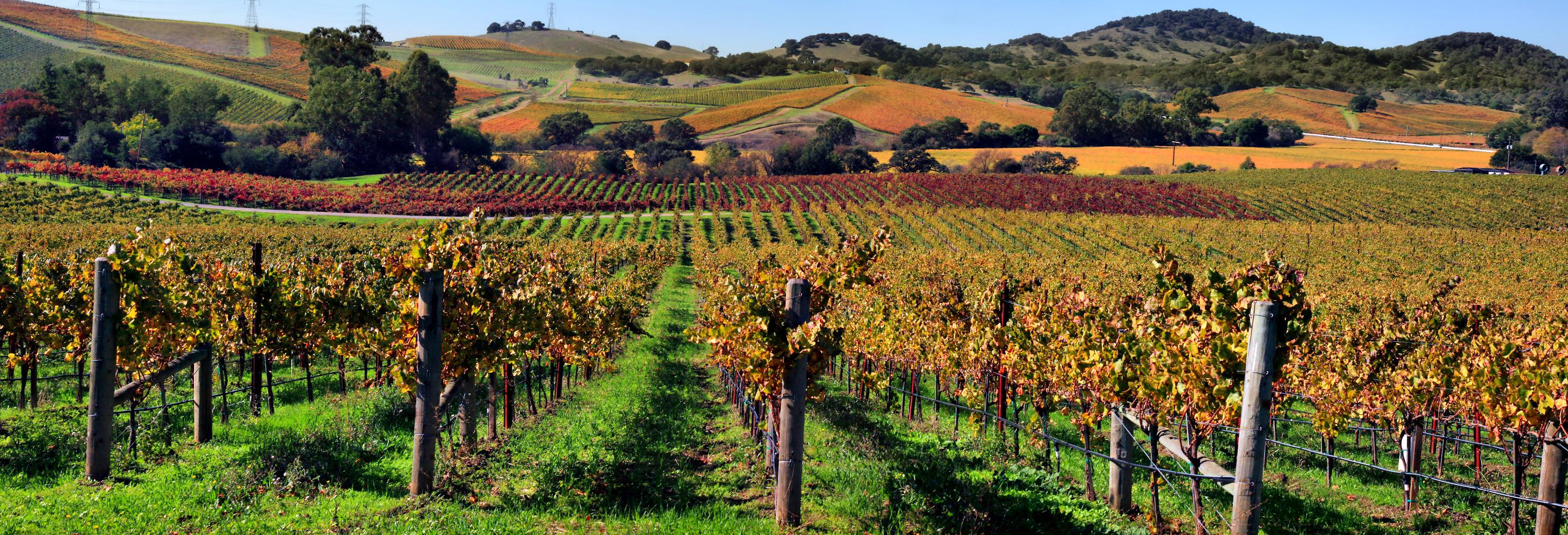 A vineyard in Napa Valley, California. Photo taken by Brocken Inaglory on November 1, 2009.