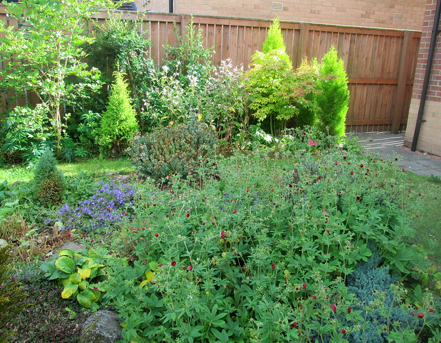my garden in Fife