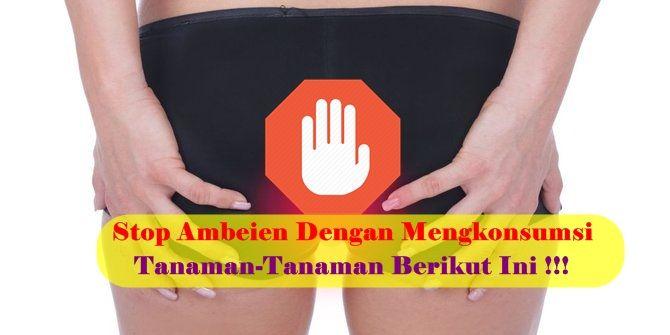 Tanaman Obat Wasir/Ambeien