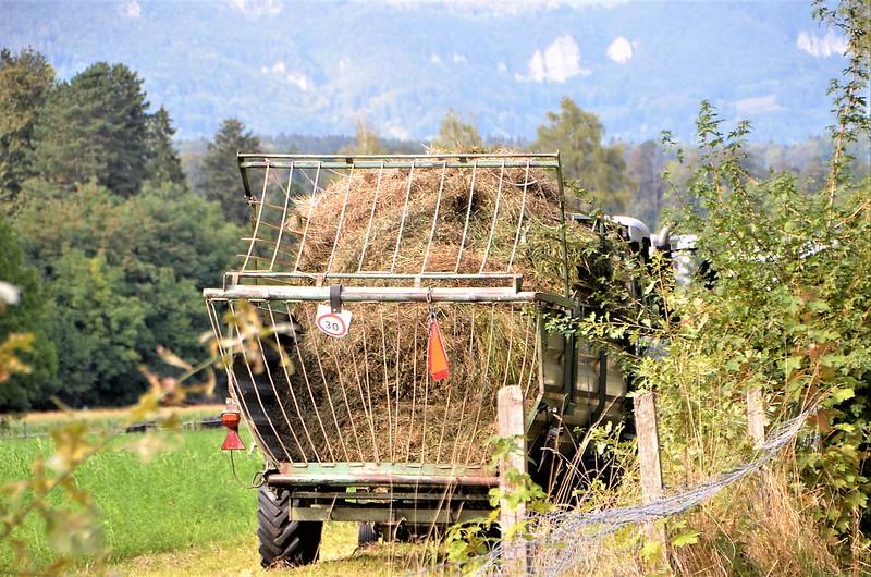 Hay Harvest 06.09 (2)