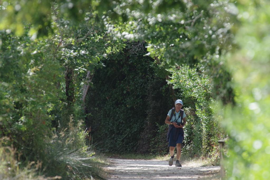 Sortie à la réserve ornithologique du Teich - 24 août 2018 - Page 7 43649313285_e238bc53d7_o