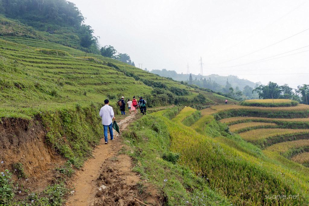 Sapa trekking - path