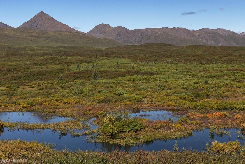 Beaver pond - Alaska