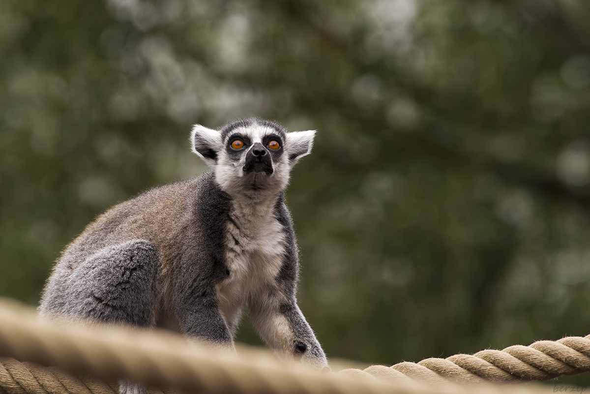 Zoos / Parcs animaliers - Page 22 43932905454_2199d642bd_o