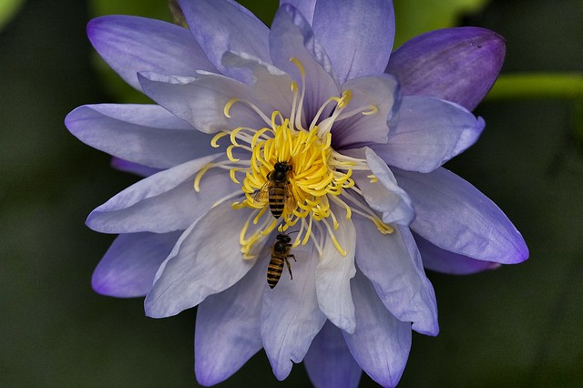 two bee's