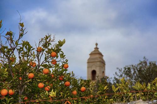 Orangen auf Mallorca