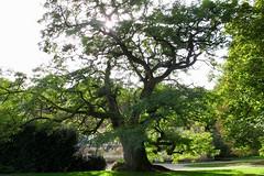 Acacia - Photo of Bannost-Villegagnon