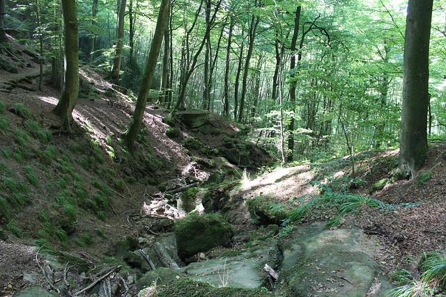 Wald im Müllerthal mit Sandsteinblöcken