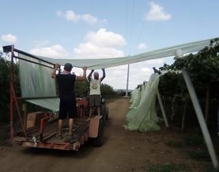 Le operazioni di installazione dei teli