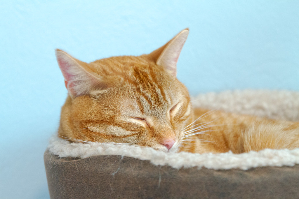 Our cat Sam sleeps in one of the heated cat beds