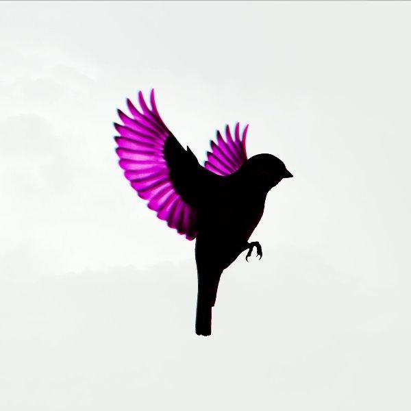 Jump, Little Children - Sparrow