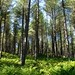 Tentsmuir Forest near Tayport