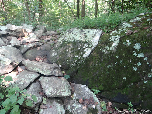 Bear's Den Overlook 15