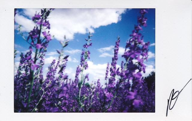 """Fujitivas_66 """" Purple Spring """""""