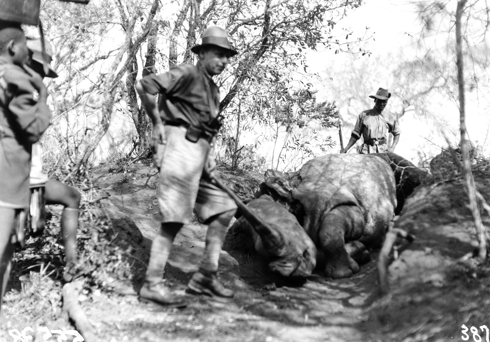 Квазулу-Наталь. Умфолози. Ханс Шомбургк рядом с мертвым носорогом
