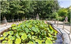 Autour d'un bassin de Lotus, la déesse Tara