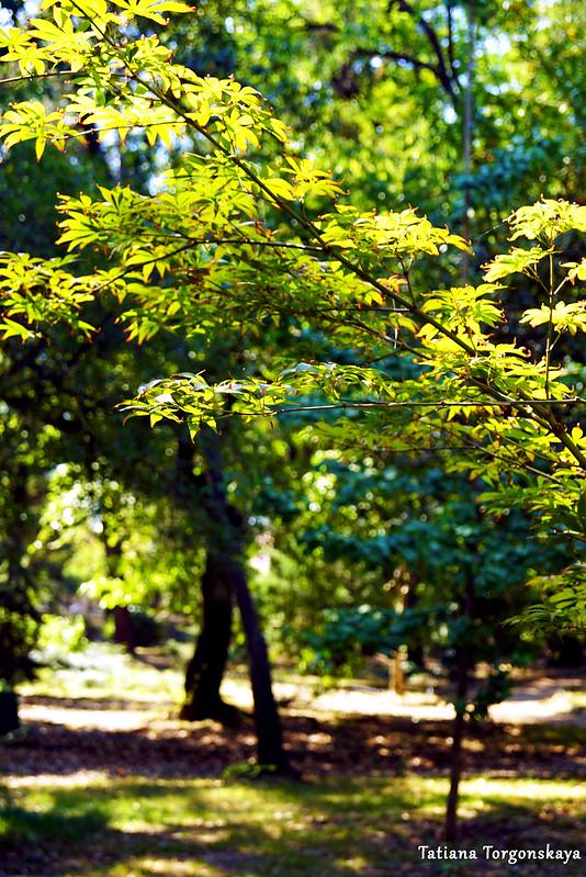 Лиственные деревья в парке Тивата