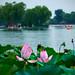 Lotus lane, Beihai lake, Beijing