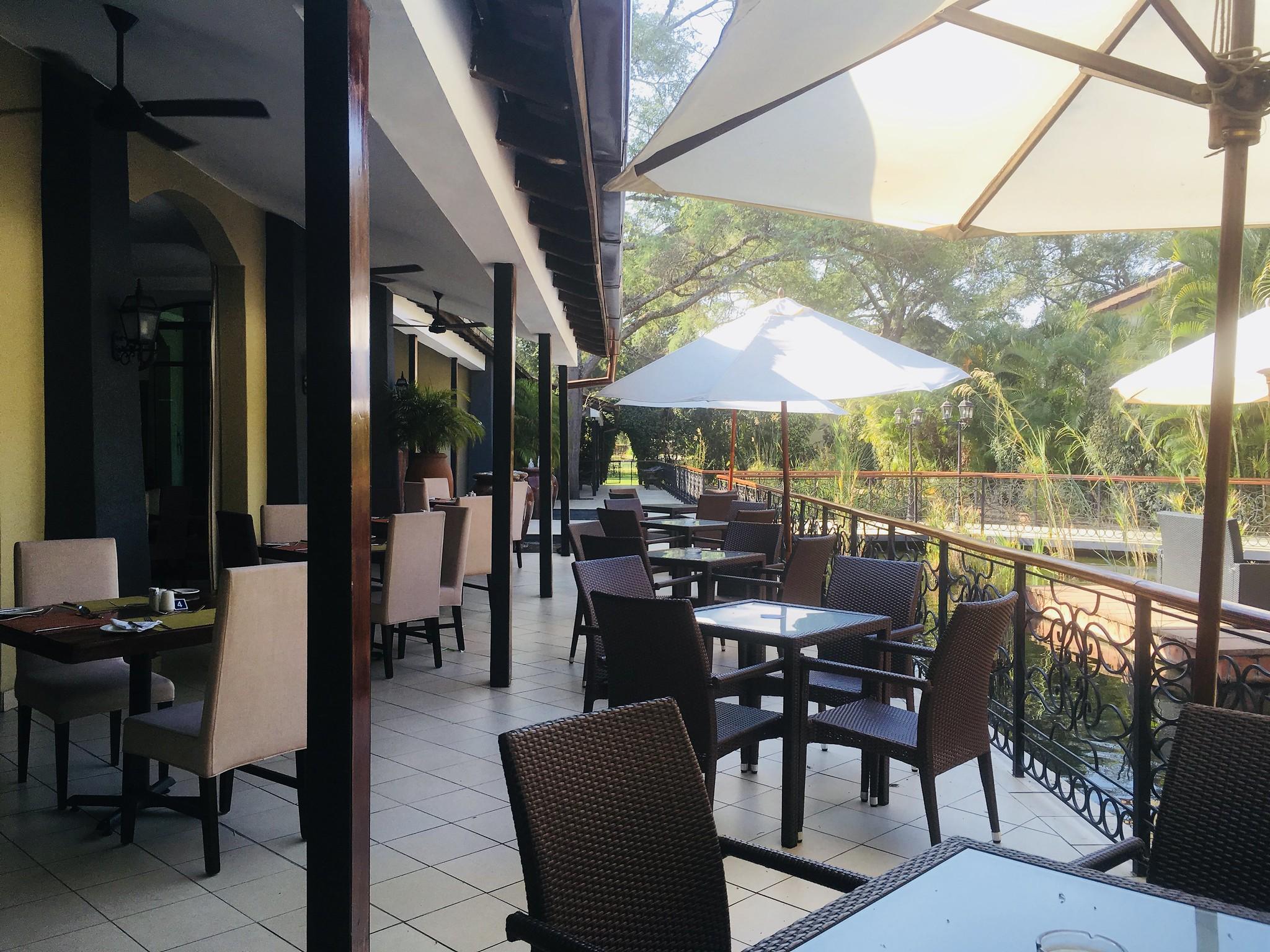 Protea Livingstone