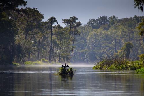 anhinga wakullasprings tree forest water dawn mist bird florida statepark edwardball