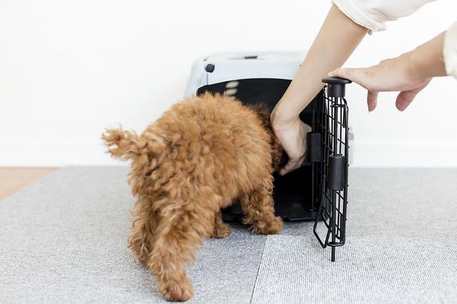 台風の備えになるハウスの練習をしている犬
