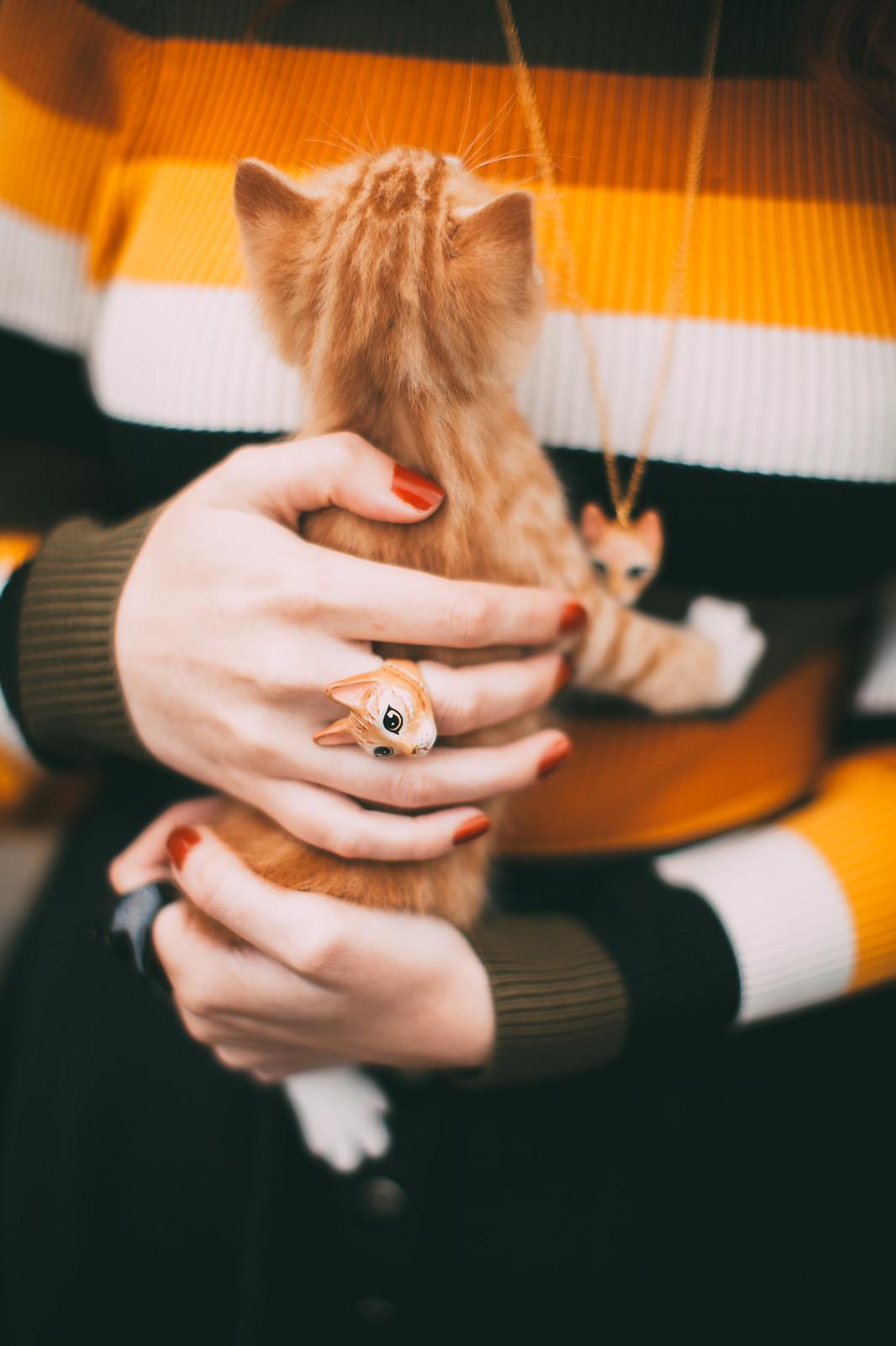 ginger kitten-29