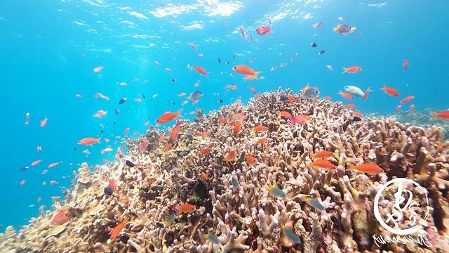色鮮やかな珊瑚と魚たち