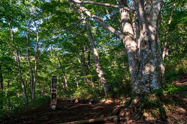 緑あざやかな樹林を行く