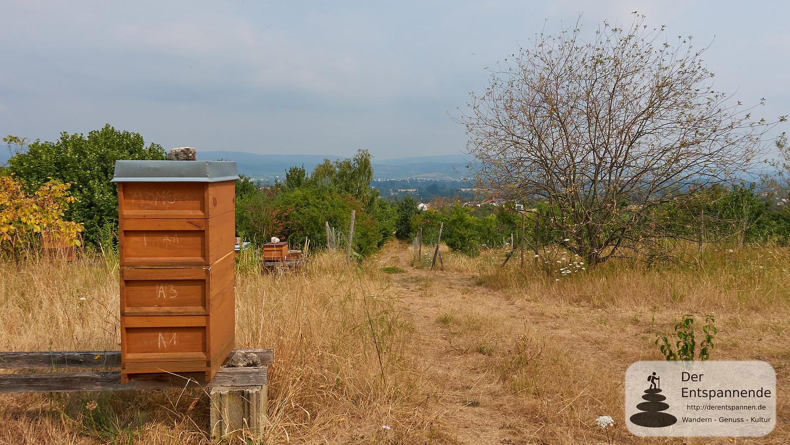Bienenstöcke mit Blick auf Rheinebene und Taunus