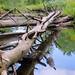 Fallen Reflections by Kerryjwagner