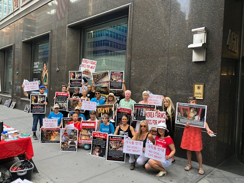 New York, South Korean Consulate General, 'Boknal' Demonstration for the South Korean Dogs and Cats (Day 3) – August 16, 2018 Organized by The Animals' Battalion