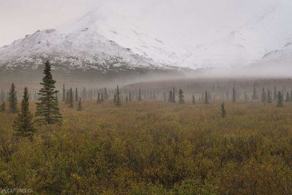 Fog and snwo in the morning - Alaska