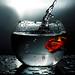 Fish Splash by Ram Iyer Photography