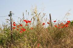 Normandie, nature