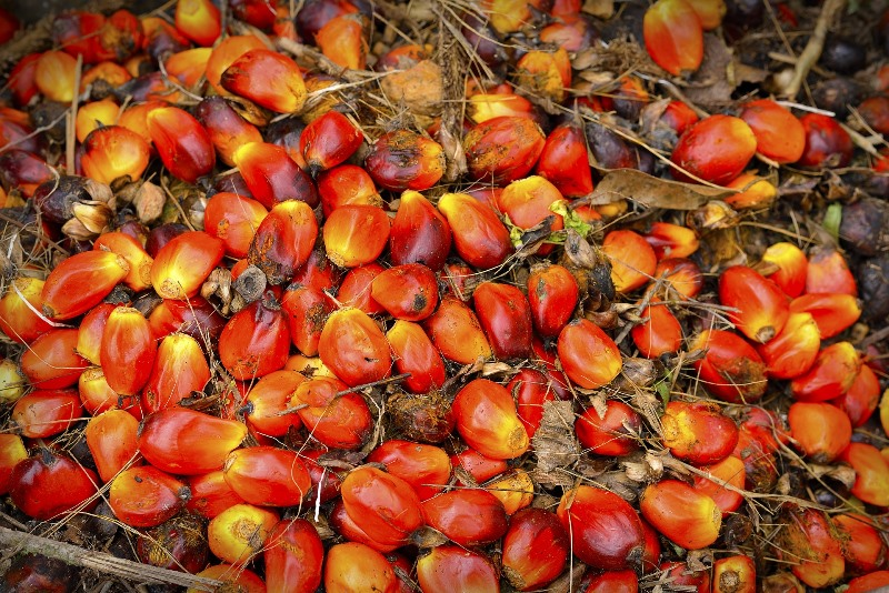 Every Palm Matters Sustainable Palm Oil