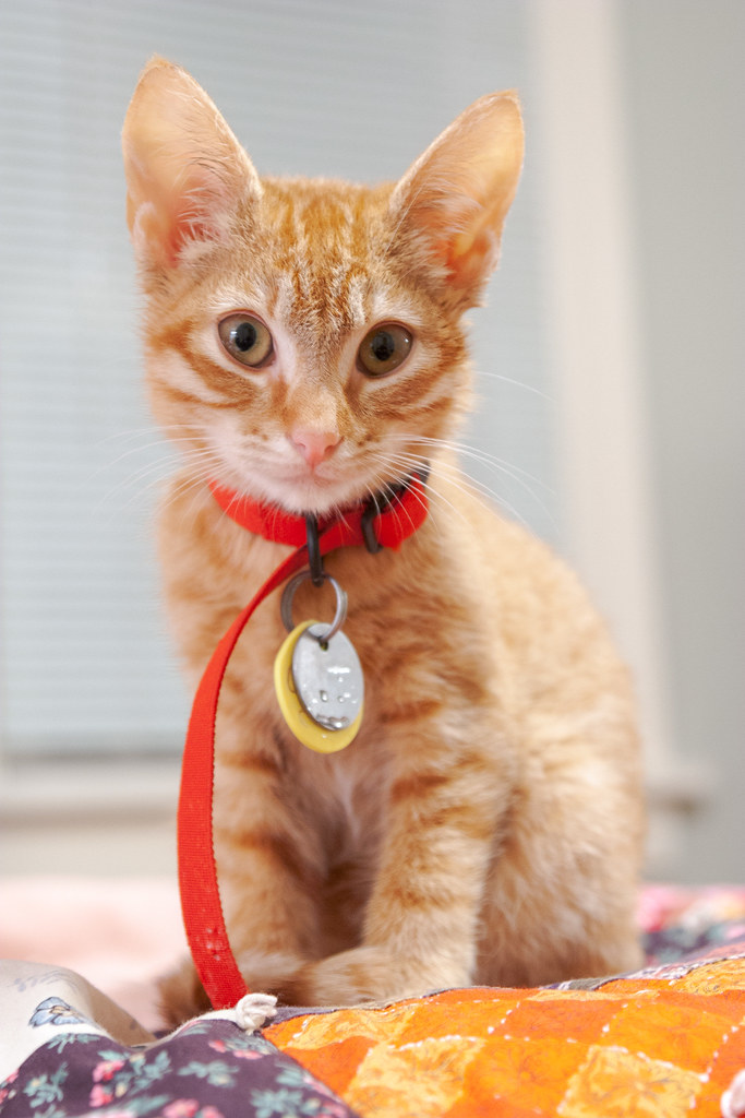 Our cat Sam as a kitten on Christmas day in 2007 with water on his tags from when he'd accidentally dunk them as he drank from his bowl