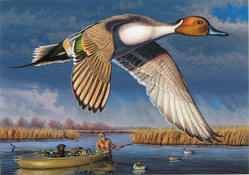 2018 Federal Duck Stamp Contest Entry 096