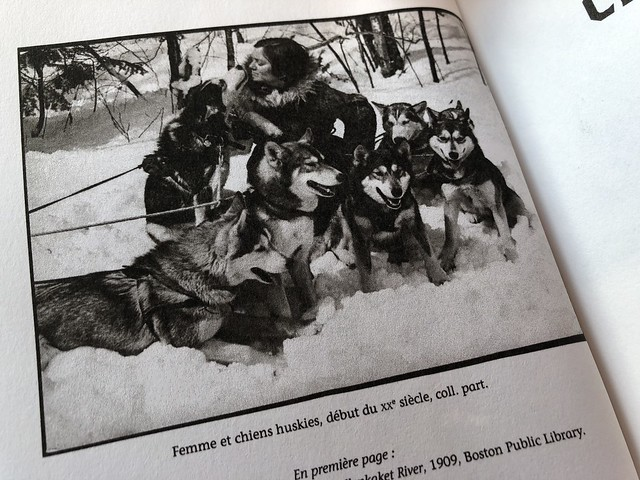Femme et chiens huskies